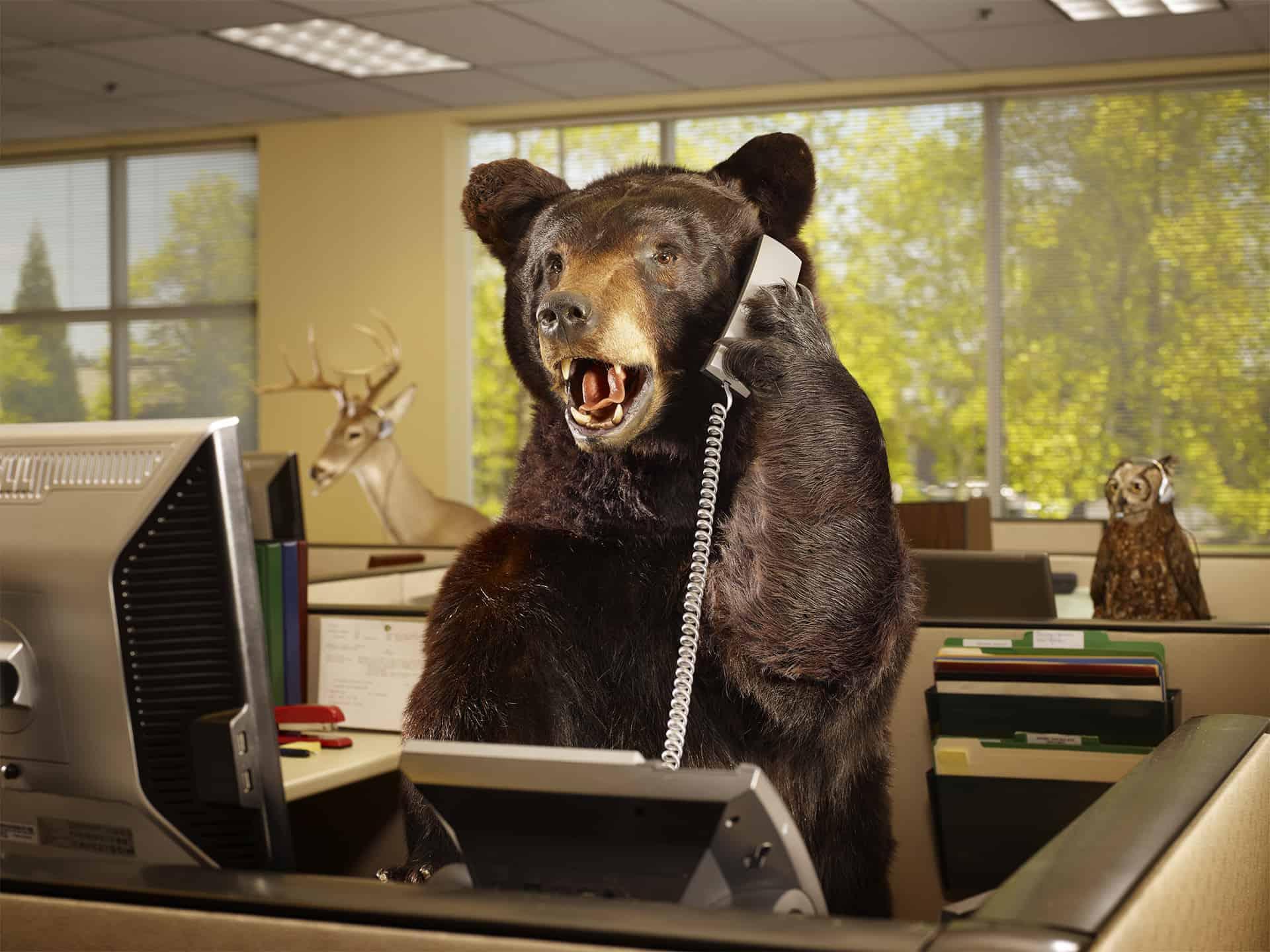 животные в офисе картинки высохнет клей, снимаем
